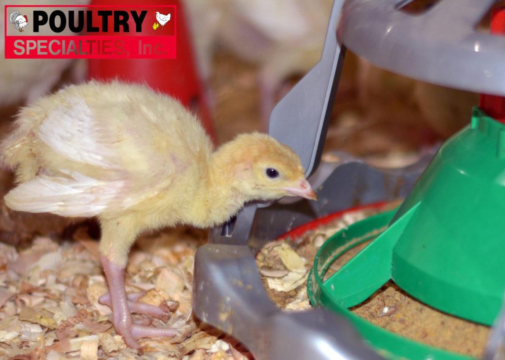 Liberty Turkey Feeder